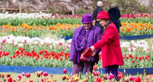 Helen Pigdon and Barbara Best enjoy the tulips during Araluen's springtime festival. Photograph — Matt Devlin.