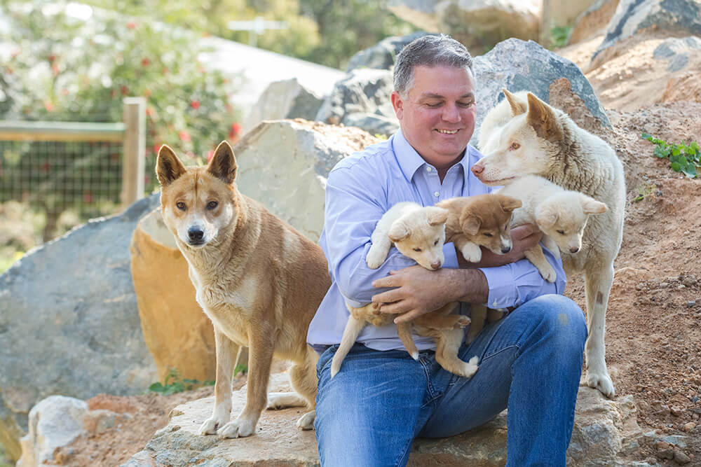 aarakin founder Glenn Dewhurst hopes to raise money to build a new dingo enclosure at the centre in Martin. Photographs — Matt Devlin.