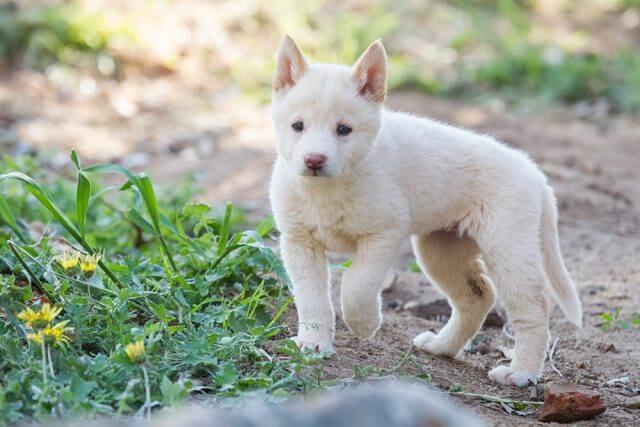 Puppy at play. Photographs — Matt Devlin.