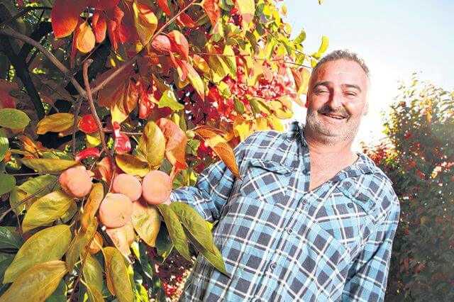 Roleystone grower Andrew Marchetti relies on the work of backpackers because of the seasonal nature of fruit picking. Photograph — Matt Devlin.