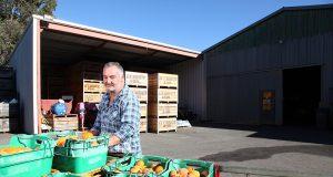Roleystone grower Andrew Marchetti relies on backpackers during harvest season. Photograph — Matt Devlin.