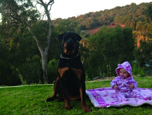 The dogs grew up with children and their owners say would not be aggressive.
